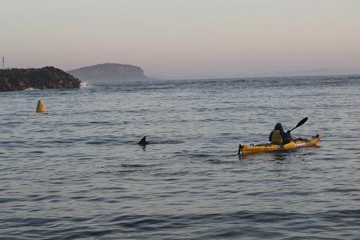 14 Dolphin sendoff