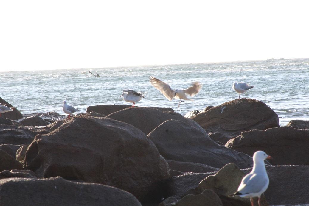7 seagulls