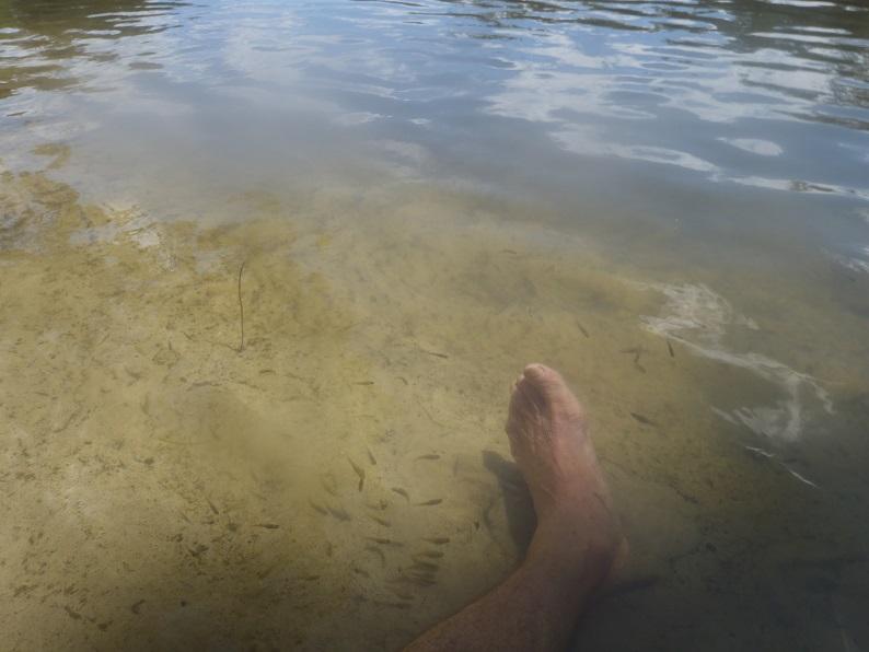 8 fish feet